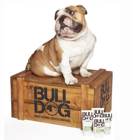 david-mitchells-soapbox-bulldog-natural-grooming